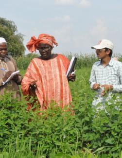 Des agriculteurs ouest africain dans un champ de coton en Inde