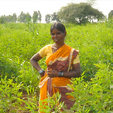 Cotton woman farmer in India